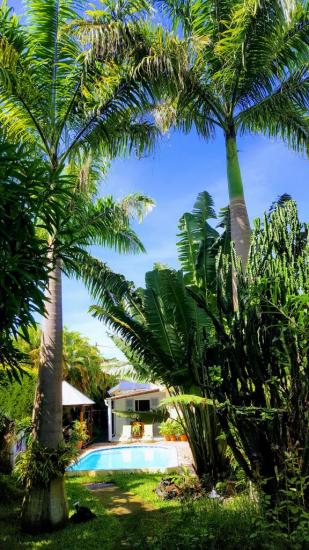 deux majestueux palmiers royaux