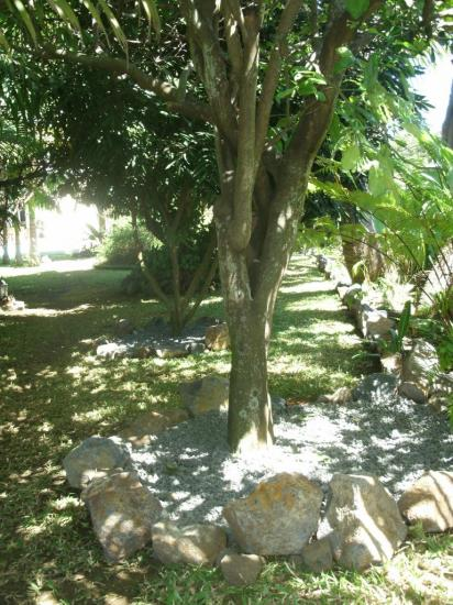 pamplemoussier du jardin