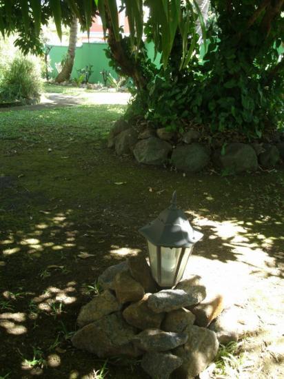 jardin : toujours des roches autour des arbres