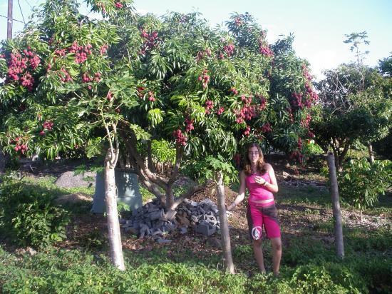photos de la location : dégustation de letchis au pied de l'arbre