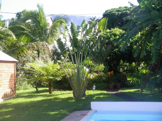 piscine et arbre du voyageur des rejets depuis ont pouss s. Black Bedroom Furniture Sets. Home Design Ideas