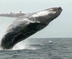 Baleine 010002 1