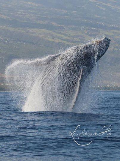 Baleine jeu totem