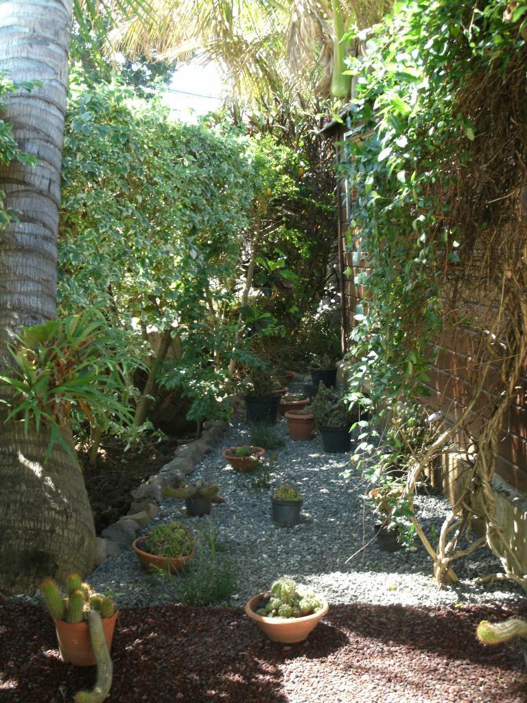 derrière l'abri de jardin un coin cactus
