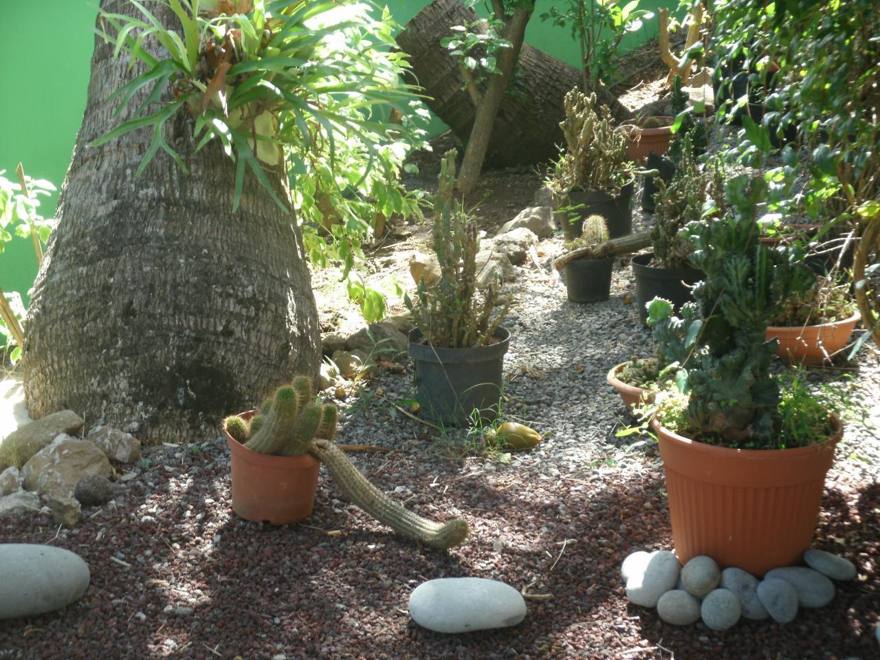 coin cactus du meublé
