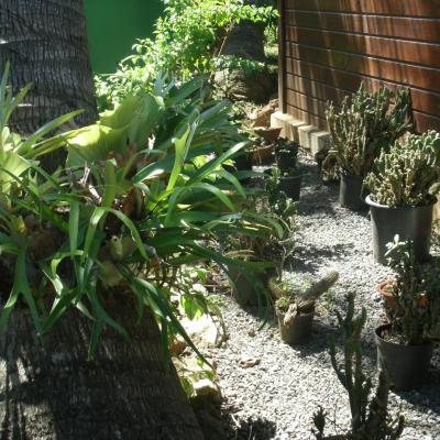 coin cactus du meublé de tourisme