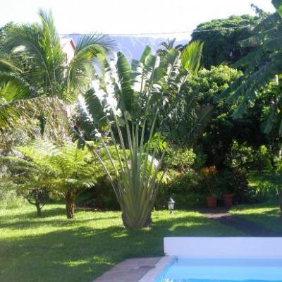 piscine et arbre du voyageur