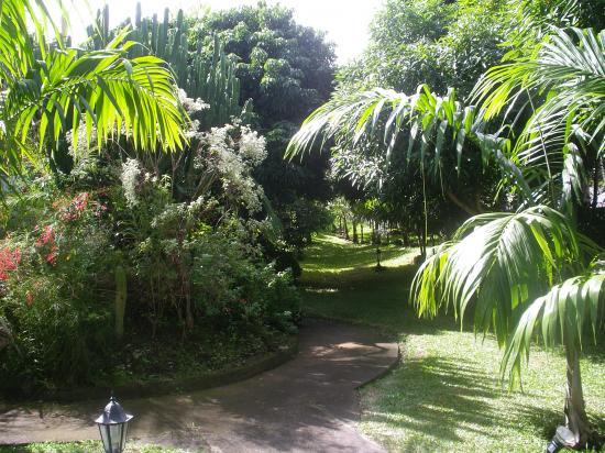 jardin de la location, petit bout de forêt tropicale